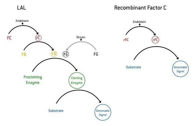 Figure 1_Clotting cascade.jpg