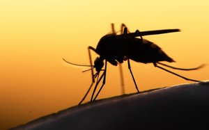Zika Sanofi.jpg