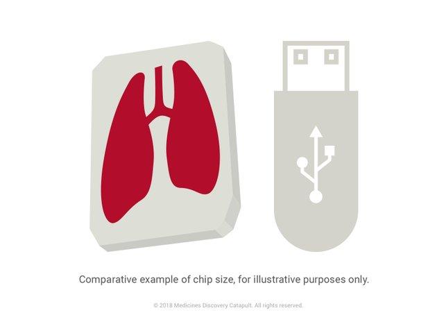 MD_Catapult_Organ_on_a_chip_illustration.jpg