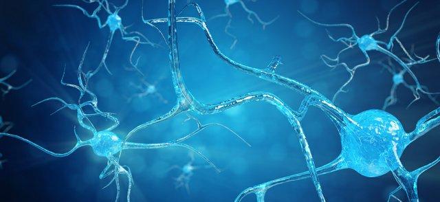 Nerve cells